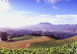 My Q&A with a California Wine Country expert