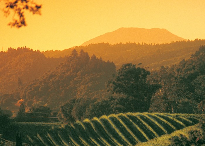 More California vineyard recommendations