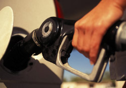Cruise lines add fuel surcharge