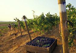 Beyond Napa Valley: Five alternative wine trails worldwide