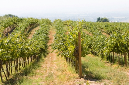 Soak up sunshine and wine in Prosser, Washington