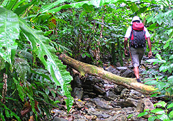 Trinidad Offers Adventure with a Tropical Twist