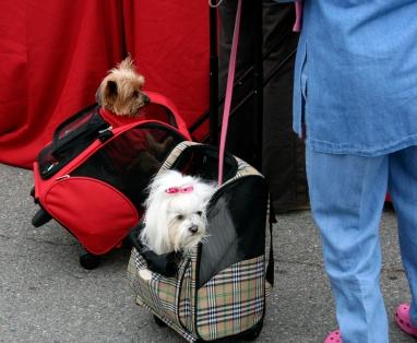 Delta Ups Pet-in-Cabin Fee to $300 Round-Trip