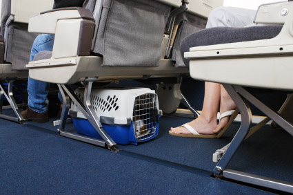 Who Says Airline Fees Are for the Dogs?