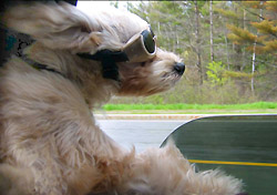 Travel With Pets? Share Your Tips!
