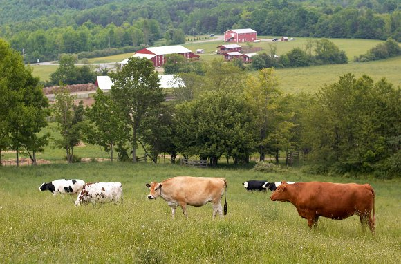 Great For Animal Lovers... Farm Sanctuary (Watkins Glen, New York)