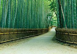 Japan to fingerprint and photograph visitors