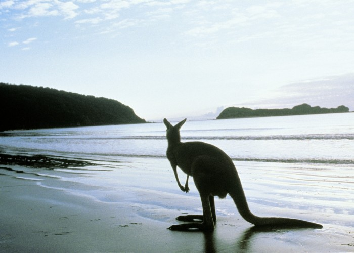 Australia: Travel Down Under From $1,399*