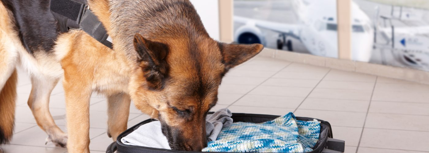 weirdest things smuggled on an airplane