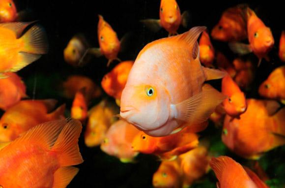 Fish Under Skirt