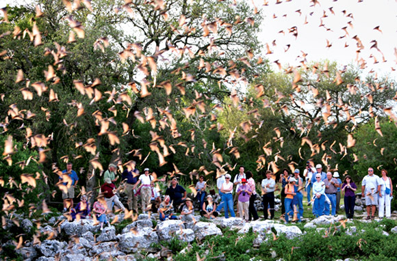 Watch 20 Million Bats Take To The Skies