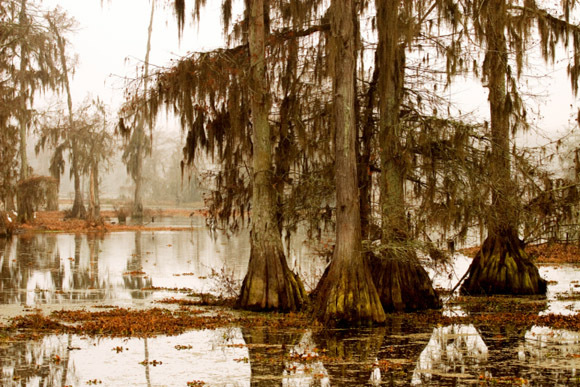 Manchac Swamp (near New Orleans, Louisiana)