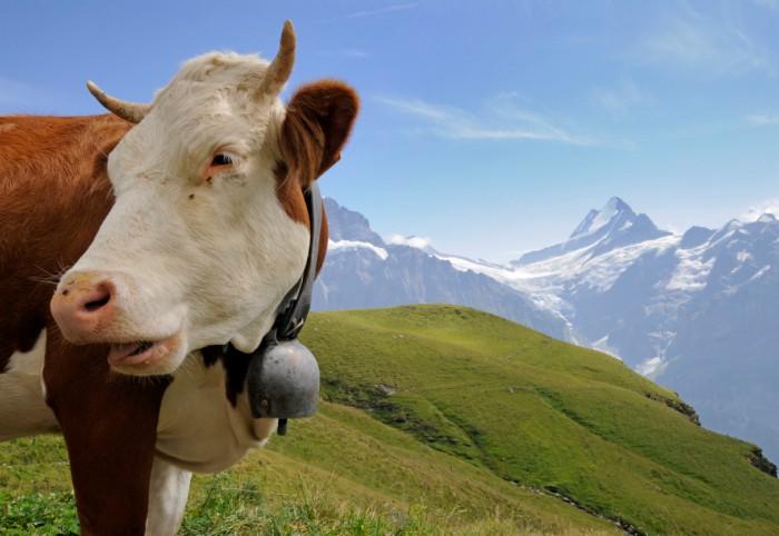 Daily Daydream: Murren, Switzerland