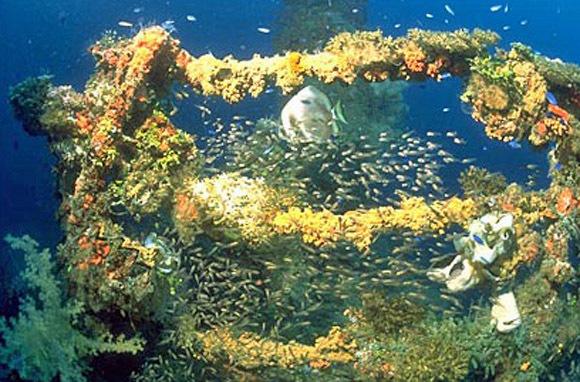 Truk Lagoon, Micronesia: WWII Ships & Airplanes