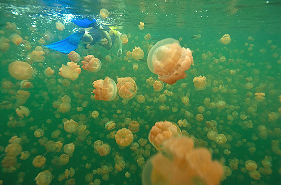 Rock Islands, Palau: Jellyfish Lake