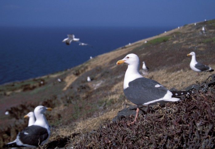 Daily Daydream: Channel Islands National Park, California