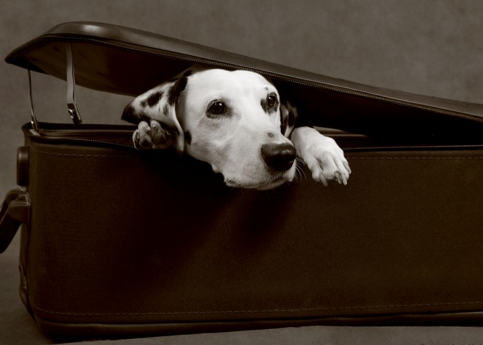 United's New Pet Policy Ruffles Feathers