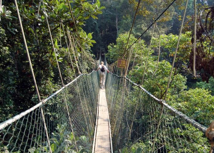 Daily Daydream: Taman Negara, Malaysia