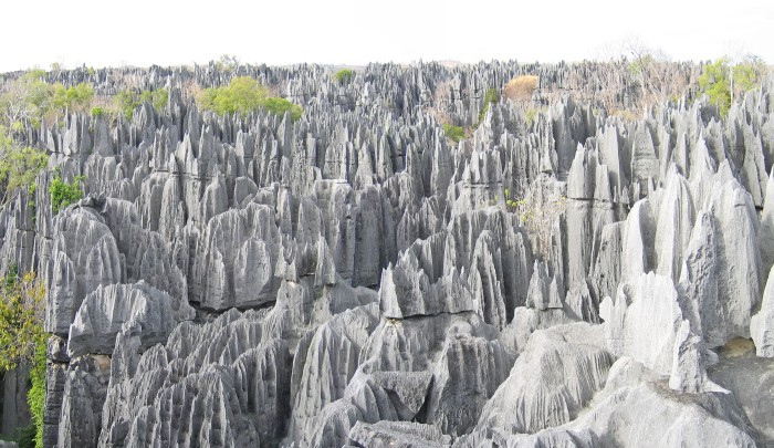 Daily Daydream: Stone Forest of Madagascar