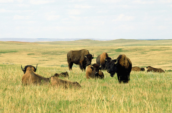 Best Hidden Destination Within The United States: North Dakota