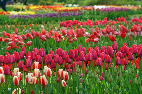 World's Best Places to See Beautiful Flowers - SmarterTravel