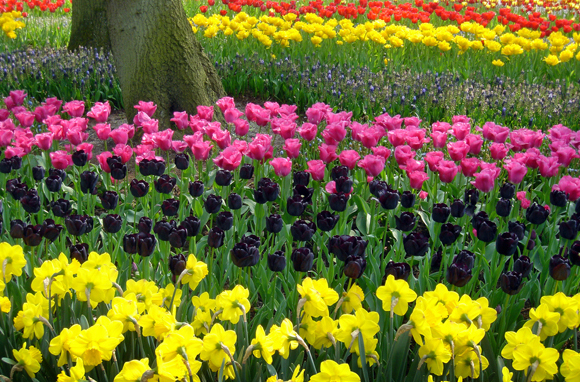 Worlds Best Places To See Beautiful Flowers