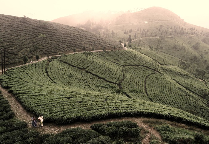 Daily Daydream: Stay at a Working Tea Plantation