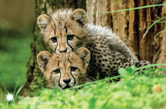 10 Cute Zoo Babies