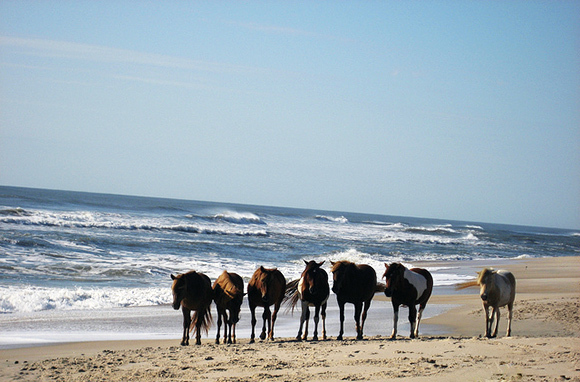 Assateague Island National Seashore, Maryland And Virginia