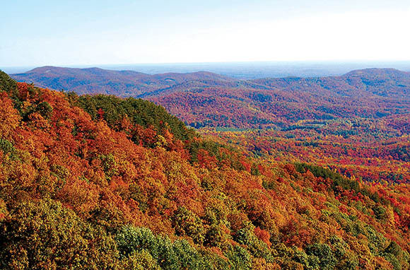 Tree-Climbing Adventure: Richmond, Virginia