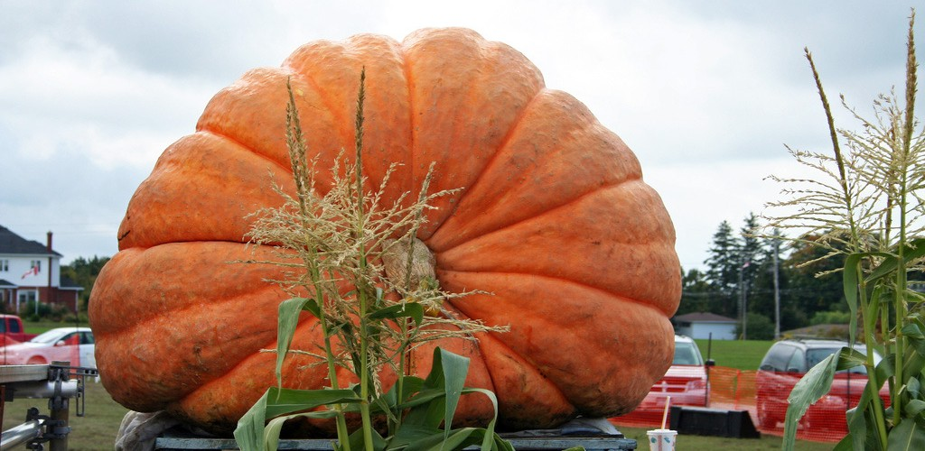 Best Places to See the World's Biggest Pumpkins