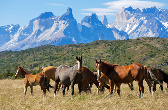 Horseback Riding in Wild Patagonia
