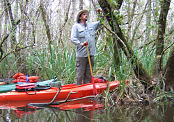 Kayaking the Everglades, Florida's Subtropical Wilderness