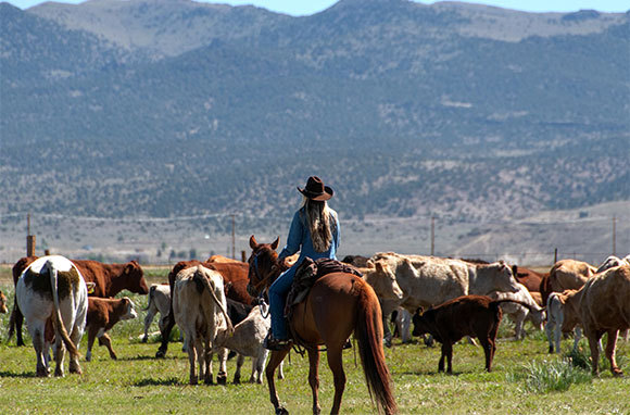 California: Go On A Cattle Drive