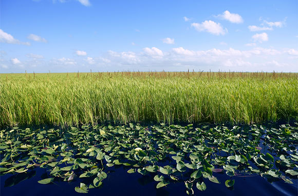 Everglades National Park, United States