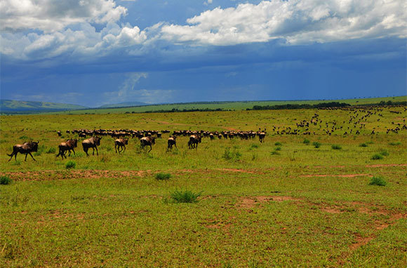 Help Conserve Wildlife In African Game Reserves
