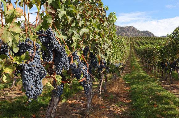 Okanagan Wine Country, British Columbia