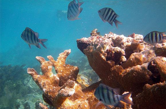 Underwater Reef Trail, U.S. Virgin Islands