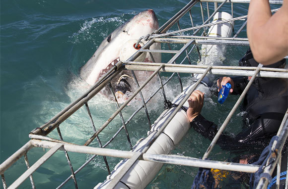 Cage Dive with Sharks, South Africa