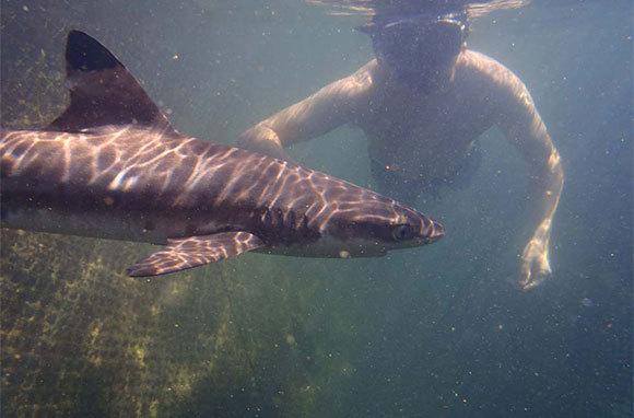 Visit a Shark Nursery, Bali