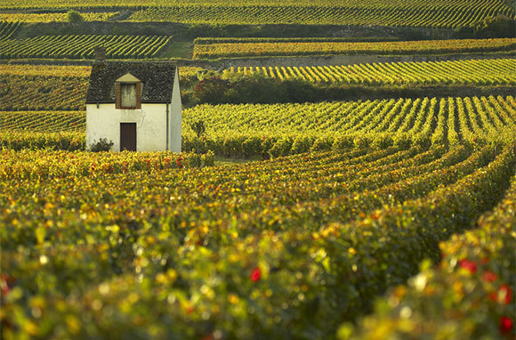 European Wine Towns