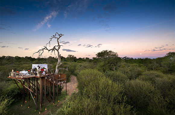 10 Best Treetop Hotels in the World