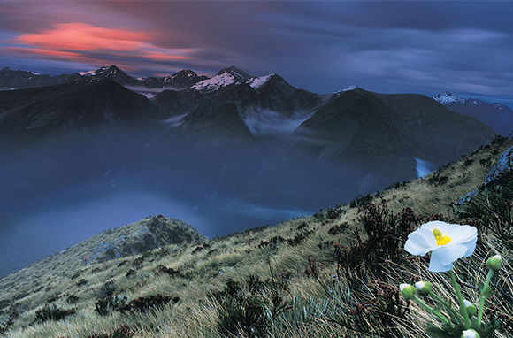 Mt. Aspiring National Park, South Island, New Zealand