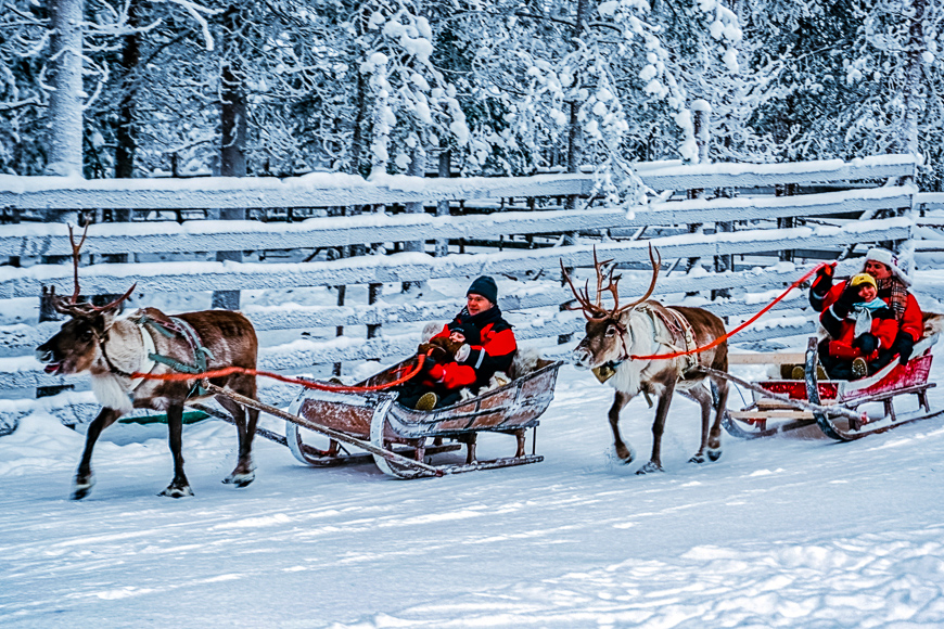 Racing on reindeer sleigh in finland lapland winter