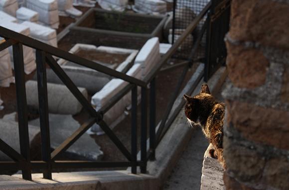 Torre Argentina Cat Sanctuary, Rome