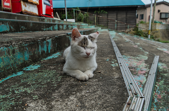Cat Heaven Island, Japan