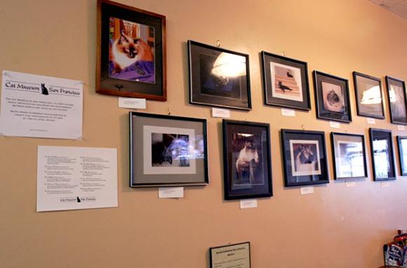 Cat Museum of San Francisco, San Francisco