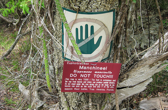 Poisonous Manchineel Trees