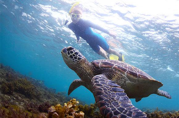 Catch A Sea Turtle In Its Natural Habitat