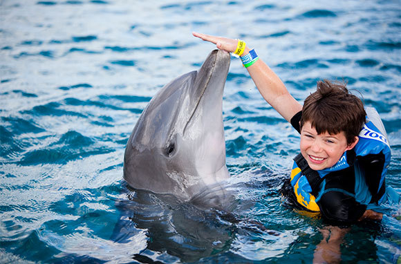 Play And Swim With Dolphins
